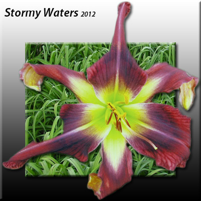 Stormy Waters - 1 Fan
